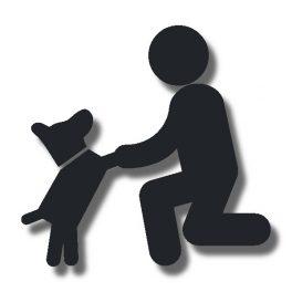 Welpenkurse in der Hundeschule Alltag mit Hund in Borken