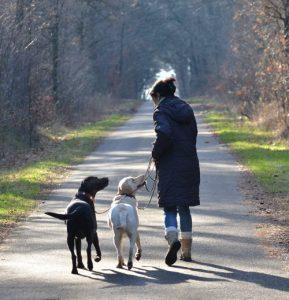 Leinenkurse in der Hundeschule Alltag mit Hund.