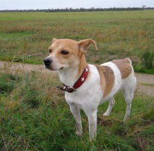 Tierschutz- und Tierheimhunde